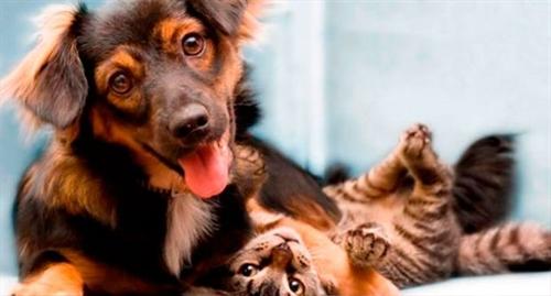Homeopatia para Animais de Estimação
